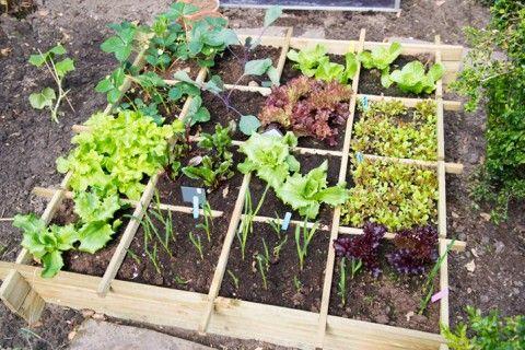 Designing Your Own Vegetable Garden | Vegetable garden, Food design ...