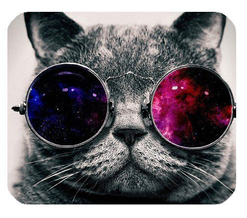 Cool Cat With Sunglasses Premium Quality Mouse Mat Pad Ebay Cat Wallpaper Hipster Cat Animal Wallpaper Cat wearing glasses wallpaper hd
