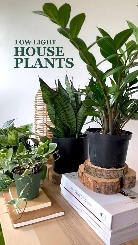 Low Light Plants: Monthly Subscription