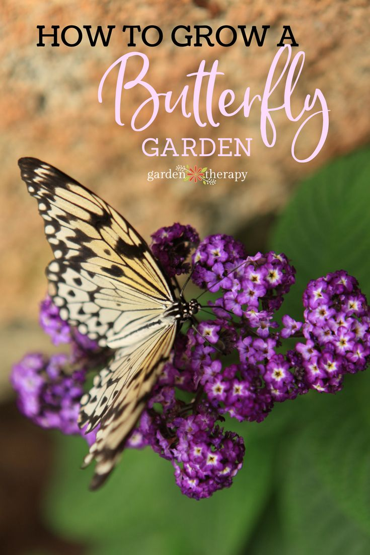 Attract Pretty Pollinators With An Irresistible Butterfly 400 x 300