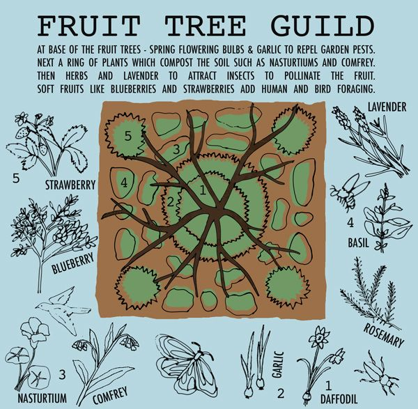 Pin by Gardening With Trees on Fruit Trees | Forest garden ...