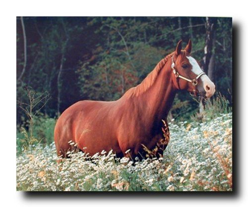 Give a new dimension to your home decor by simply adding this Caspian horse in daisy field animal art print poster. It will be a great addition to your home decor and bring a unique charm into your living room set up. You'll be proud to hang this poster on your wall. We offer durability and perfect color accuracy which keep long lasting beauty of the product.