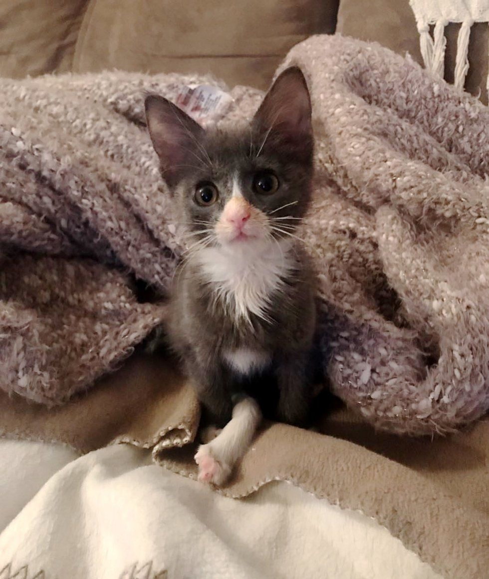 This Kitten Can Do Anything Just Like Other Cats With Her Long Leg Check More At Https Na In 2020 Kitten Cute Cats And Kittens 6 Week Old Kitten