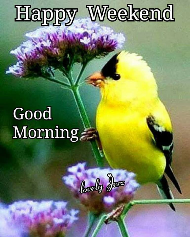 Yellow Bird Happy Weekend Good Morning Morning Weekend Good Morning