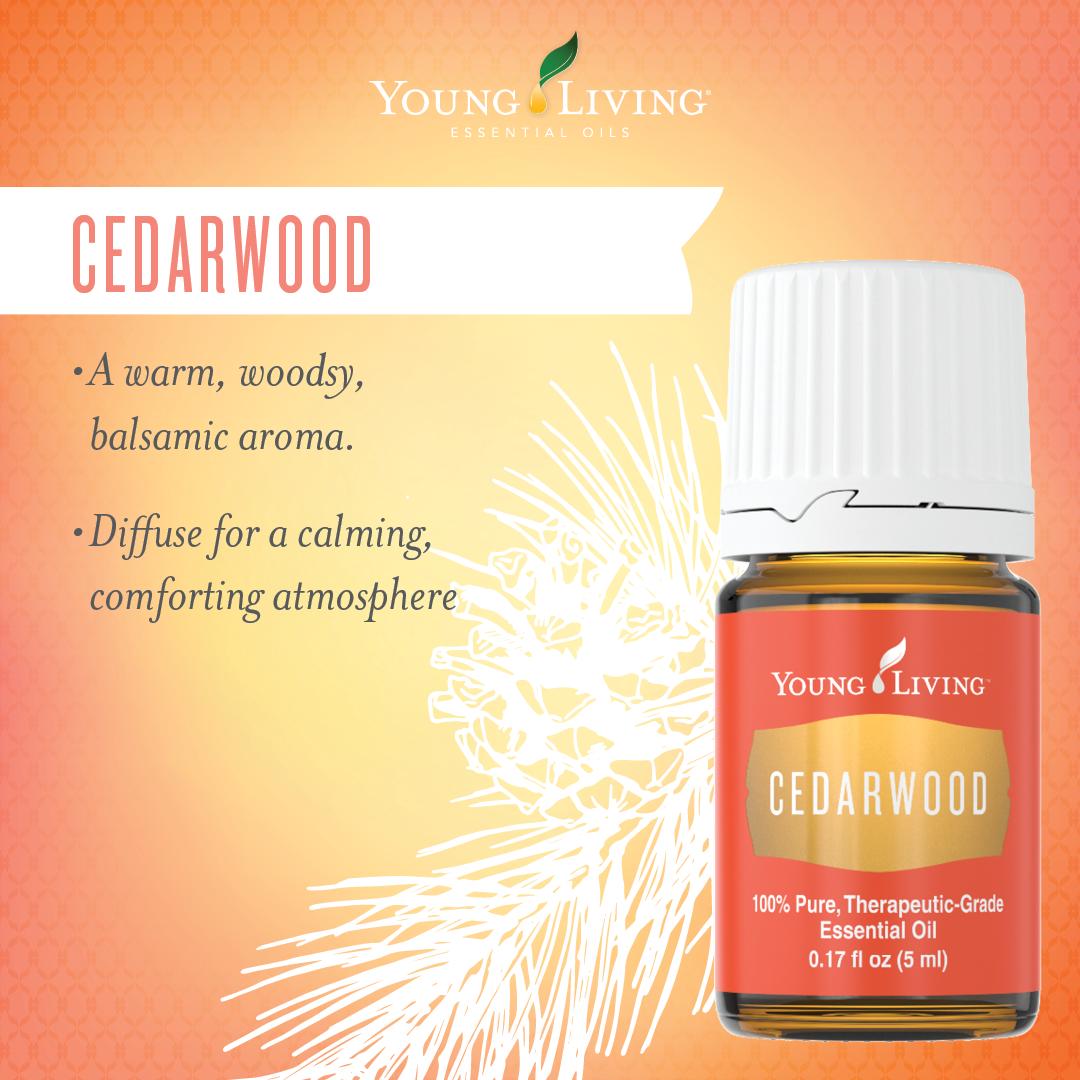 Young Living Essential Oils:  Cedarwood | WWW.THESAVVYOILER.COM