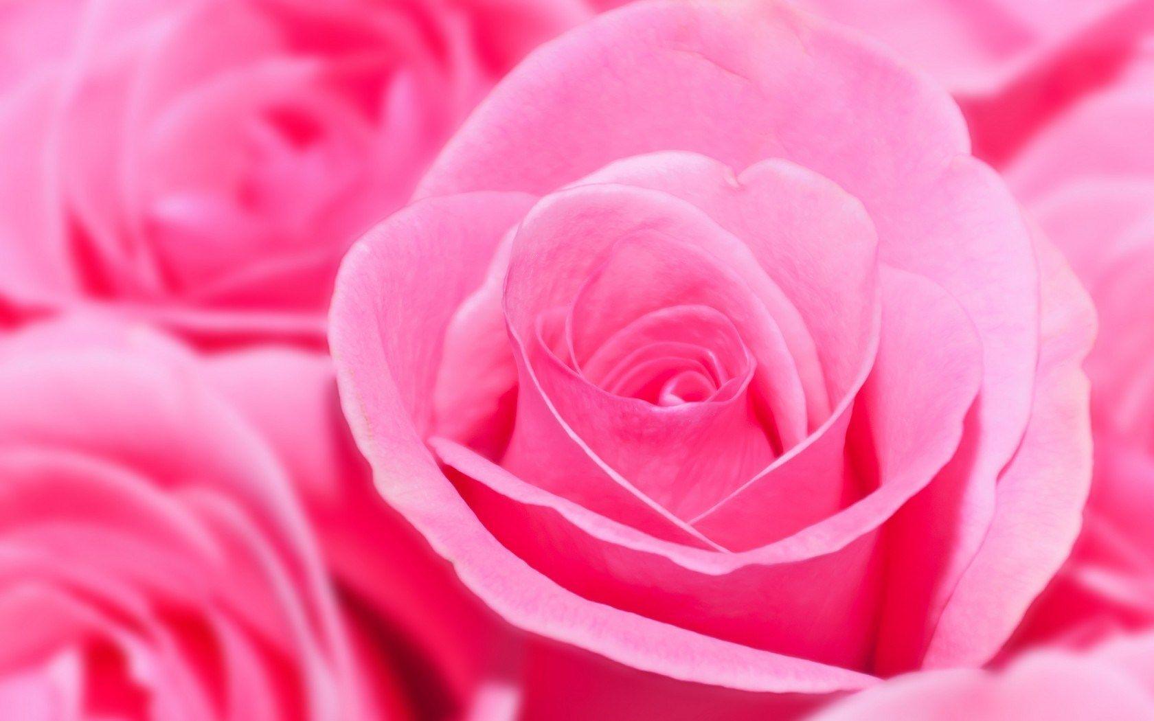 Flowers roses pink gl pinterest rose wallpaper red flowers flowers roses pink mightylinksfo