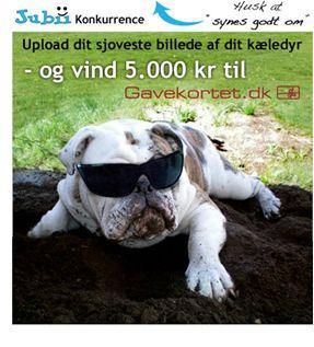 Campaign using Newsperience Facebook Photo App / fotokonkurrence  newsperience.dk  jubii.dk - sjoveste kældedyr