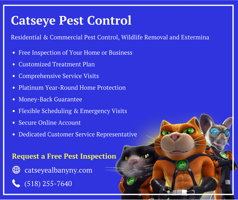 Remove unwanted pests from your CatsEye