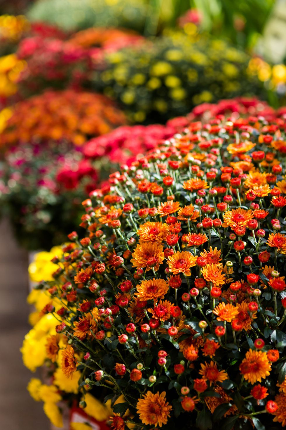 fall flowers thatull spruce up your garden this autumn