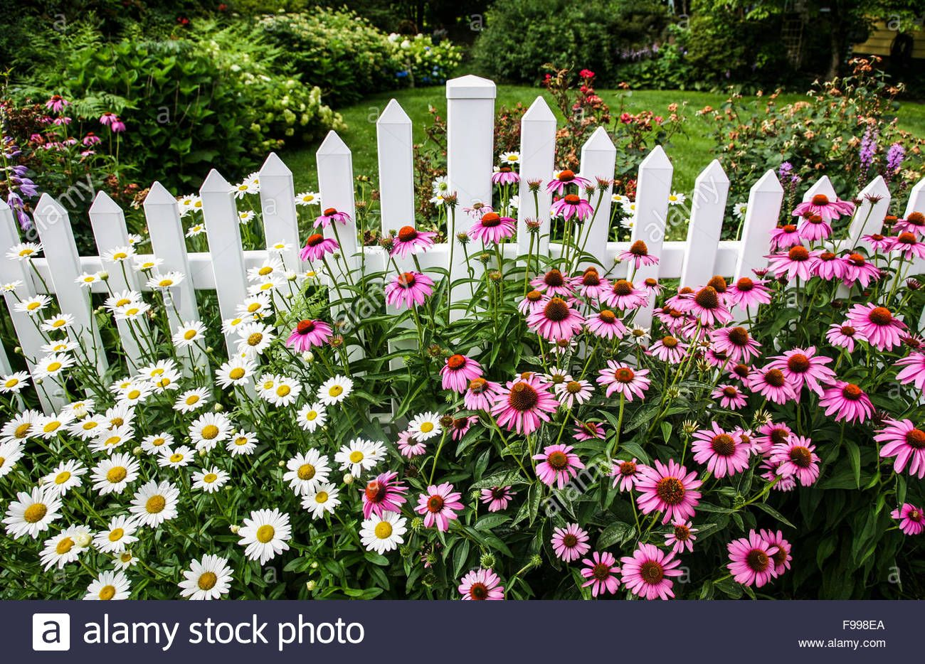 English Garden Border With Purple Cone Flowers Daisies Along A