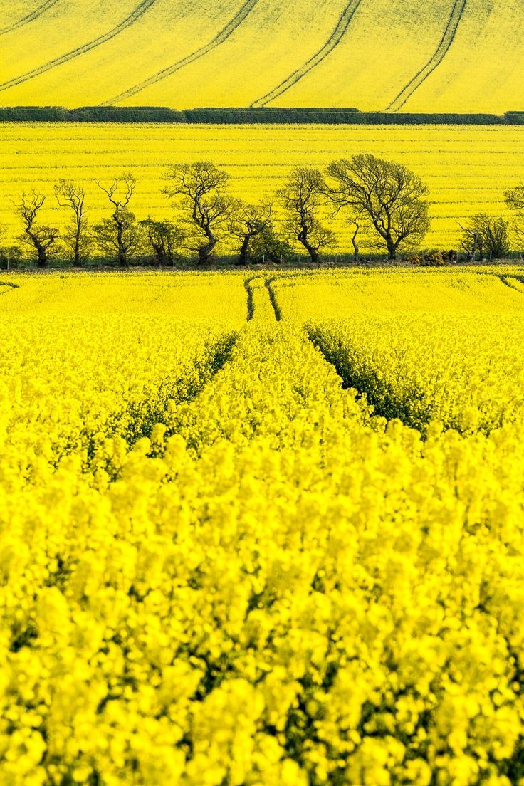 Lifeisverybeautiful Rapeseed Blossom By Paul Richards On 500px