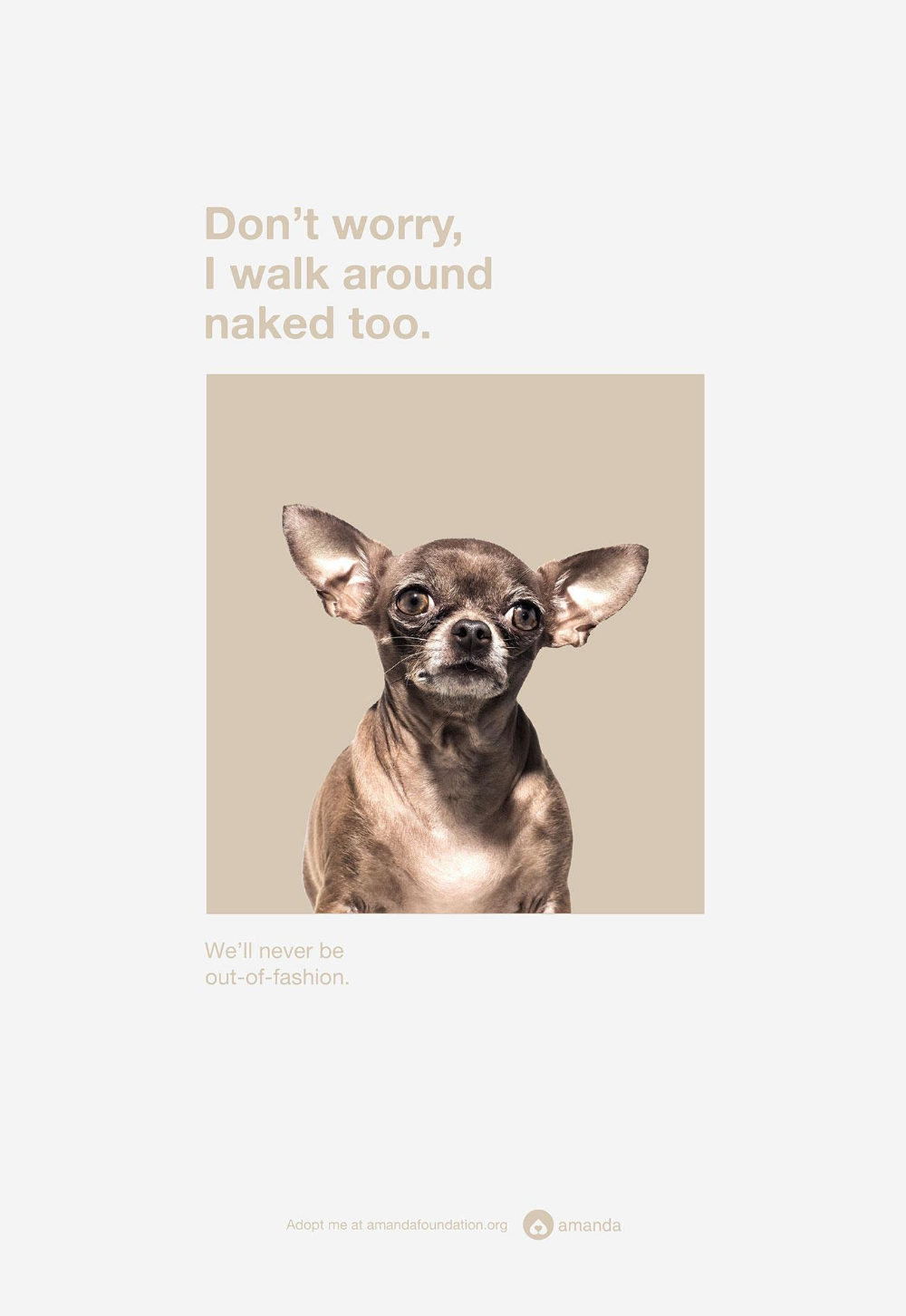 Amanda Foundation Print Advert By Saatchi Saatchi Chihuahua Ads Of The World Saatchi Saatchi Chihuahua Print