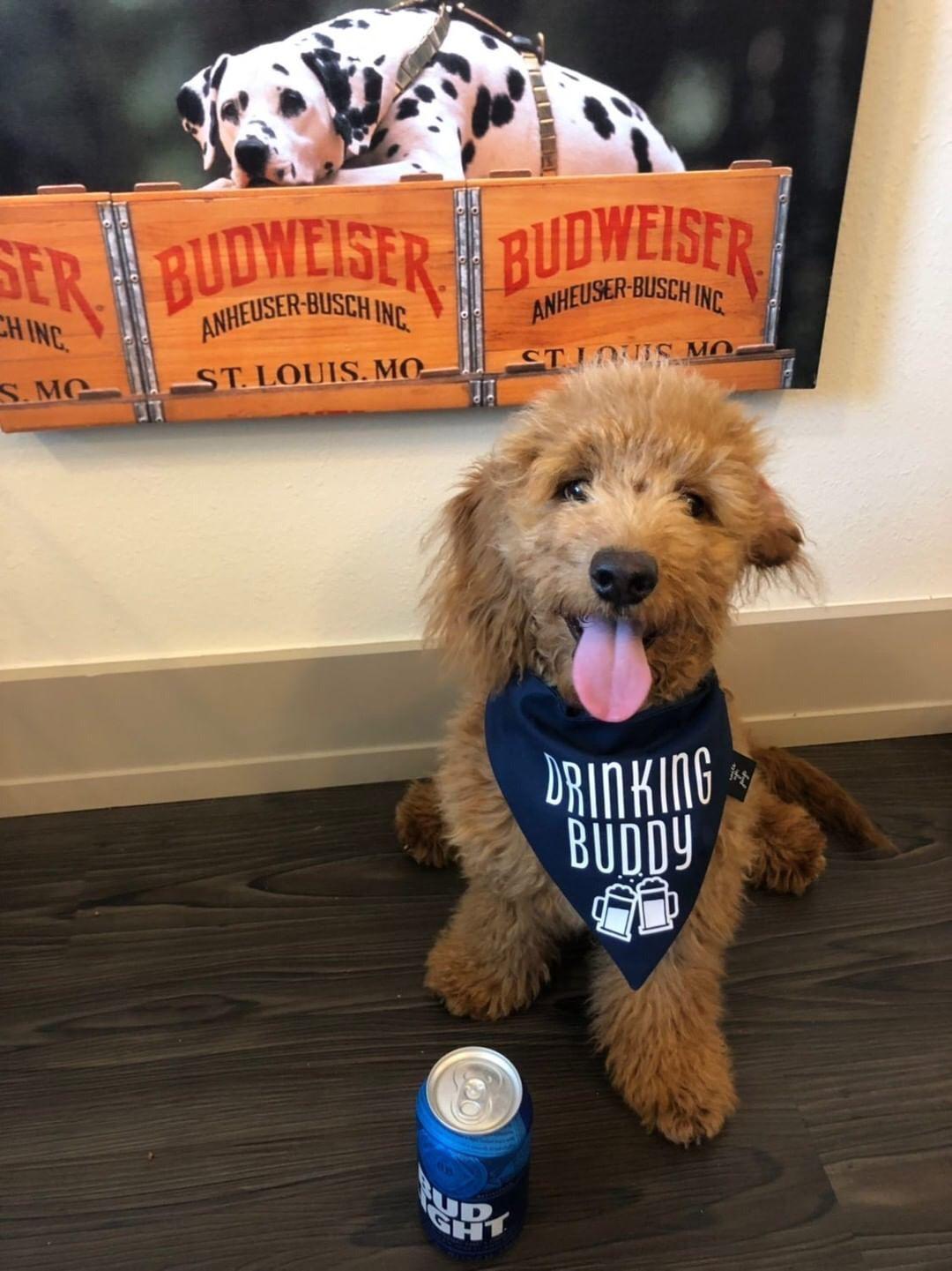 Drinking Buddy Dog Bandana Tails Up Pup Funny Dog Toys Girl Dog Accessories Dog Bandana
