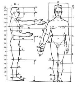 Perfect Female Body Measurements Now knowing that we have to limit the region where the proportional theory works. After all a 7 foot women with perfect proportions would not be .