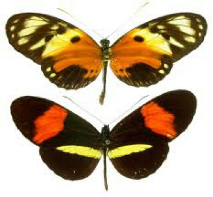 A Butterfly Is A Mainly Day-flying Insect Of The Order