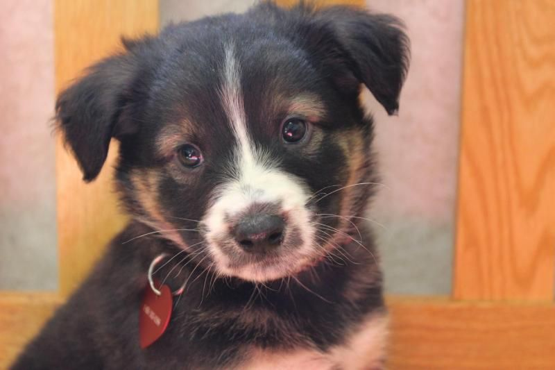 Adopt Smore on Rescue dogs, mix, Terrier