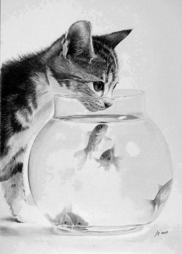Beautiful Pencil Sketches Of Animals