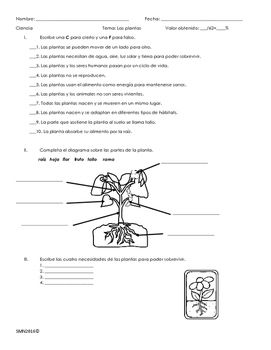 Examen Sobre Las Plantas Teacherspayteachers Education