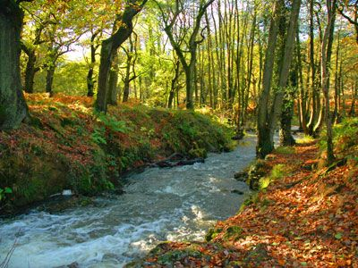 Forest Of Dean Forest Of Dean Scenic Routes Christmas In England
