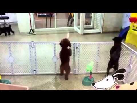 27 Cosas Incomodas Y Dolorosas Que Jamas Dejaran De Ser Incomodas Chihuahua Funny Dancing Animals Funny Dog Pictures