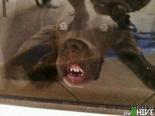 Awesome dog that just makes me laugh