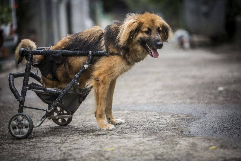 This Animal Hospital Gives A Wheelchair To Every Dog Who Needs One Disabled Dog Animal Hospital Dogs