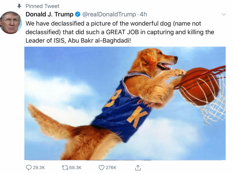 Picture Of A Dog That Helped Kill Bag Daddy