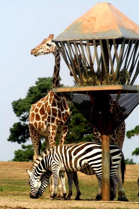 Six Flags Safari Six Flags Great Adventure Wild Safari Cute Animals