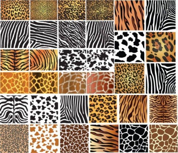 Patrones De Piel De Animales Conjunto De 34 Texturas