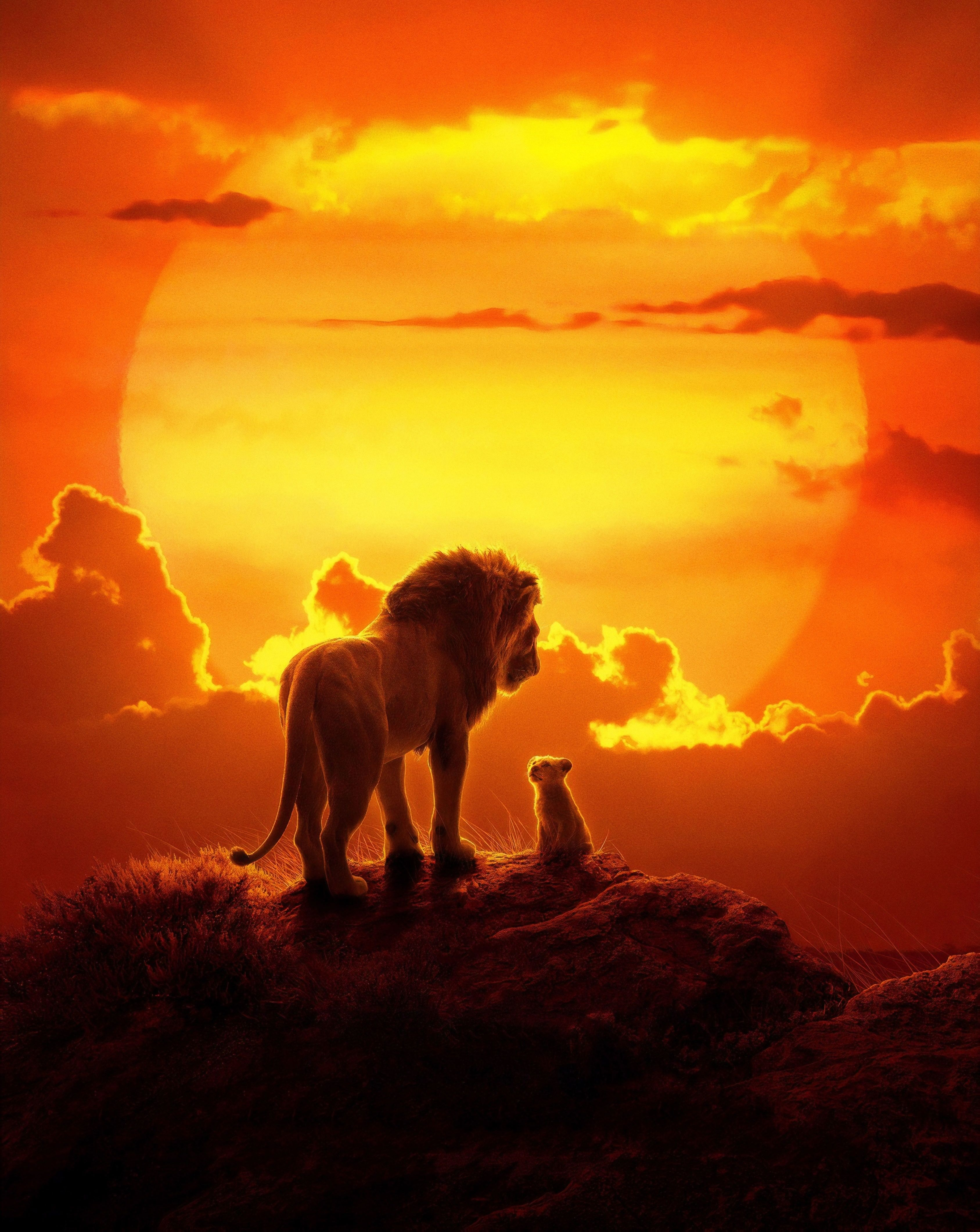 Downaload the lion king, lion and cub, 2019 movie wallpaper, 3375x4241