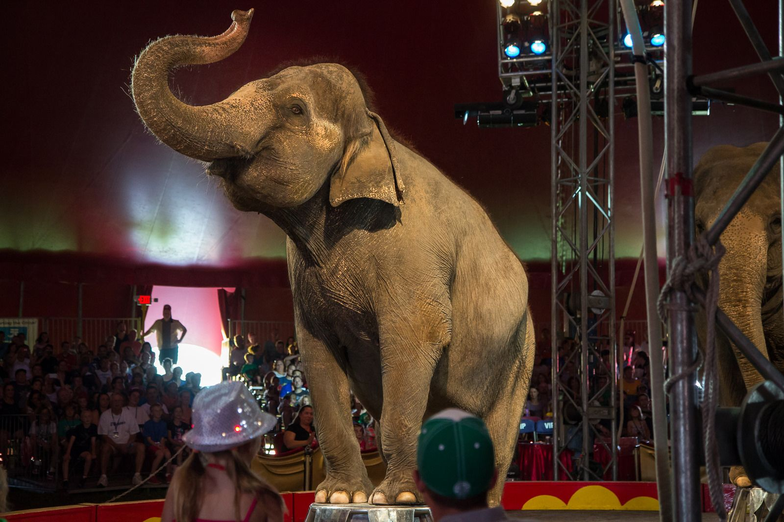 Circus Tricks And Tv Stunts How The International Zoo Association Defines Education Animals Wild Circus Elephant Elephant