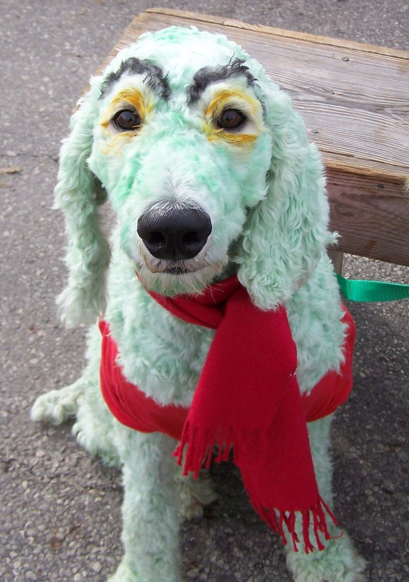 Related image Dog halloween costumes, Dog costumes, Animals