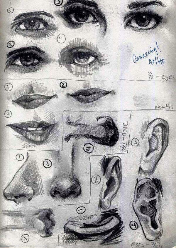 Dibujo De Facciones De La Cara Dibujo Al Carbón Dibujos Pinturas