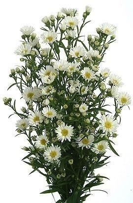 Pin On Shop For Wholesale Bulk Fresh Flowers