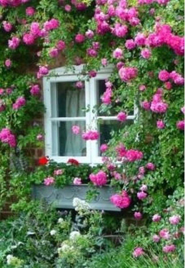 Simple Rose Garden: 10 Easy Tips To Plant A Climbing Rose