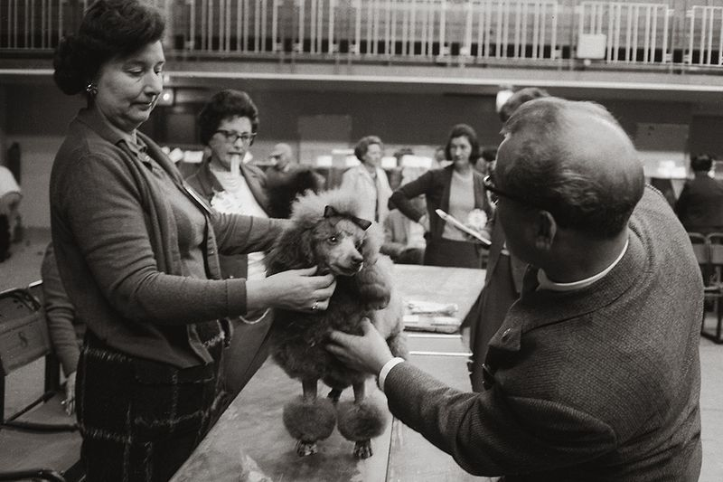 """Participants in the dog show """" Crufts """" in the exhibition hall Olympia in London , 1965"""