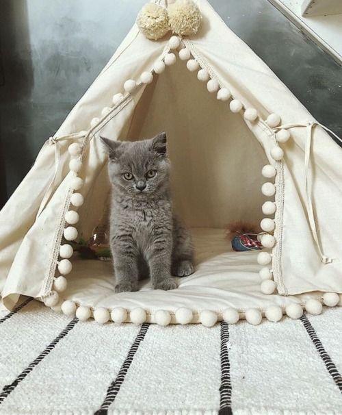 Cute Kitties Cute Kitties With Images Kittens Kittens Cutest