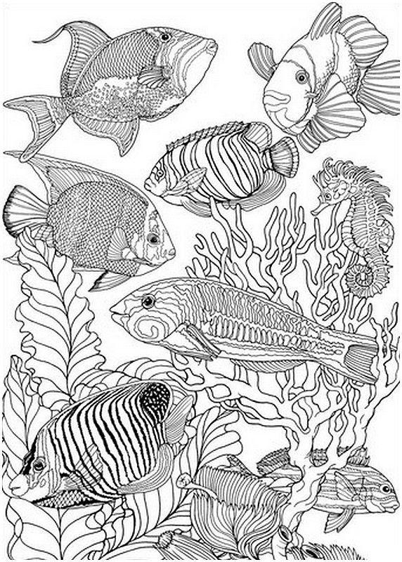 Coloriage adulte Poissons | bruneaux | Pinterest | Colorin y Libros