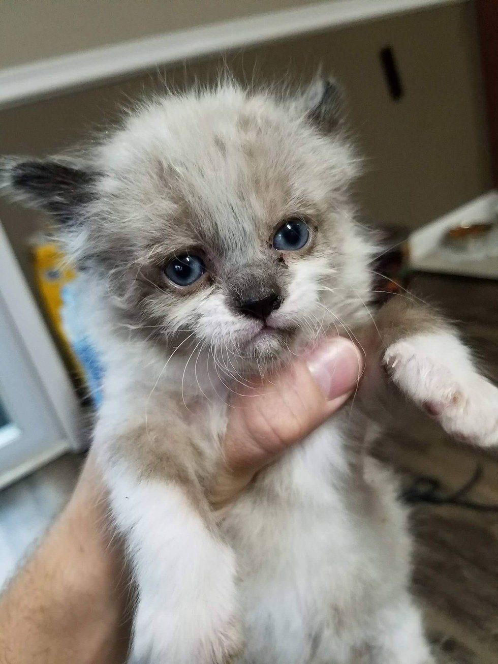 Man Saves Crying Kitten Found Outside The Fence And Becomes His New Dad Love Meow Cute Baby Animals Cute Animals Cute Cat Wallpaper