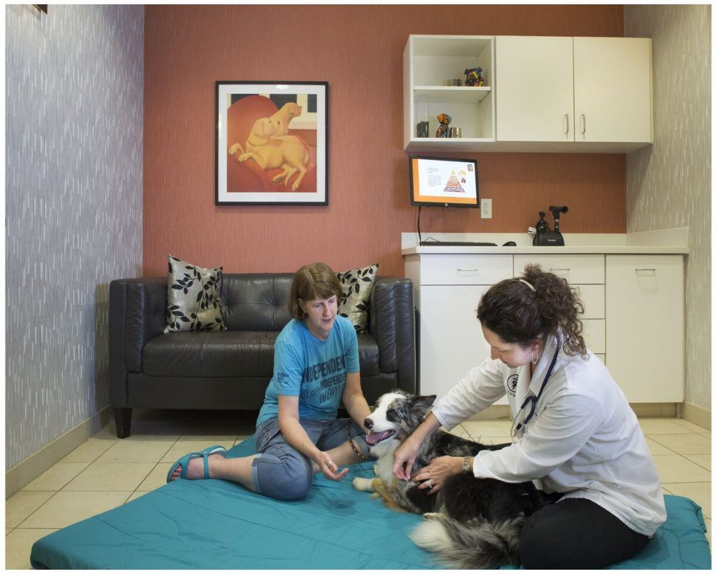 VVC acupuncture Hospital design, Veterinary clinic, Pet