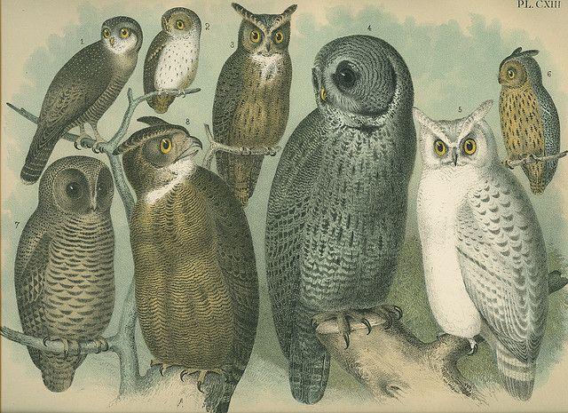 Freevintageillustrations Owl Illustration Owl Images Owl