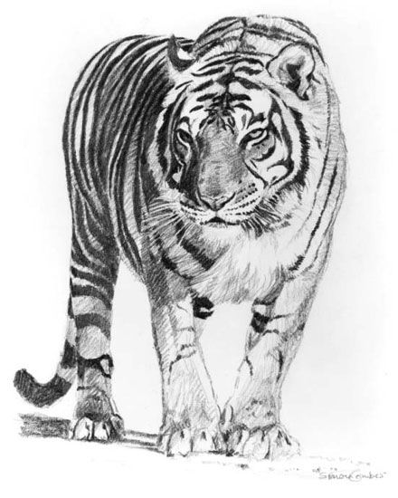 Pin By Wanderlitcia Mendes Goncalves On Only God Can Make A Pet Tiger Tiger Pictures White Tiger