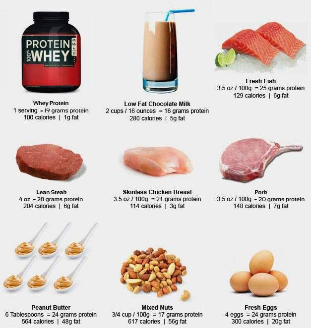 What Is Your Preferred Source Of Protein Bodybuilding