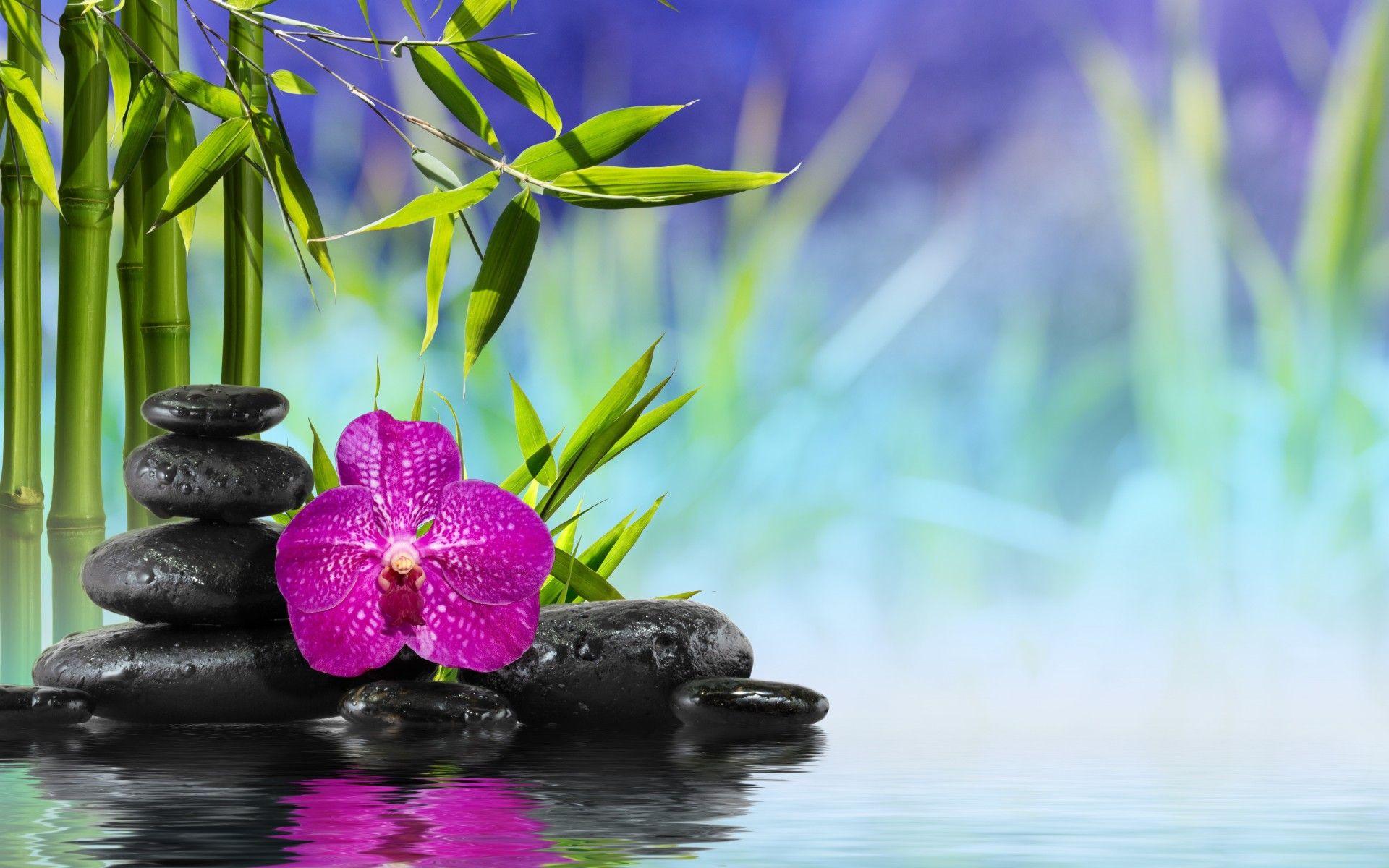spa  zen  stones  bamboo  flower  orchid  water