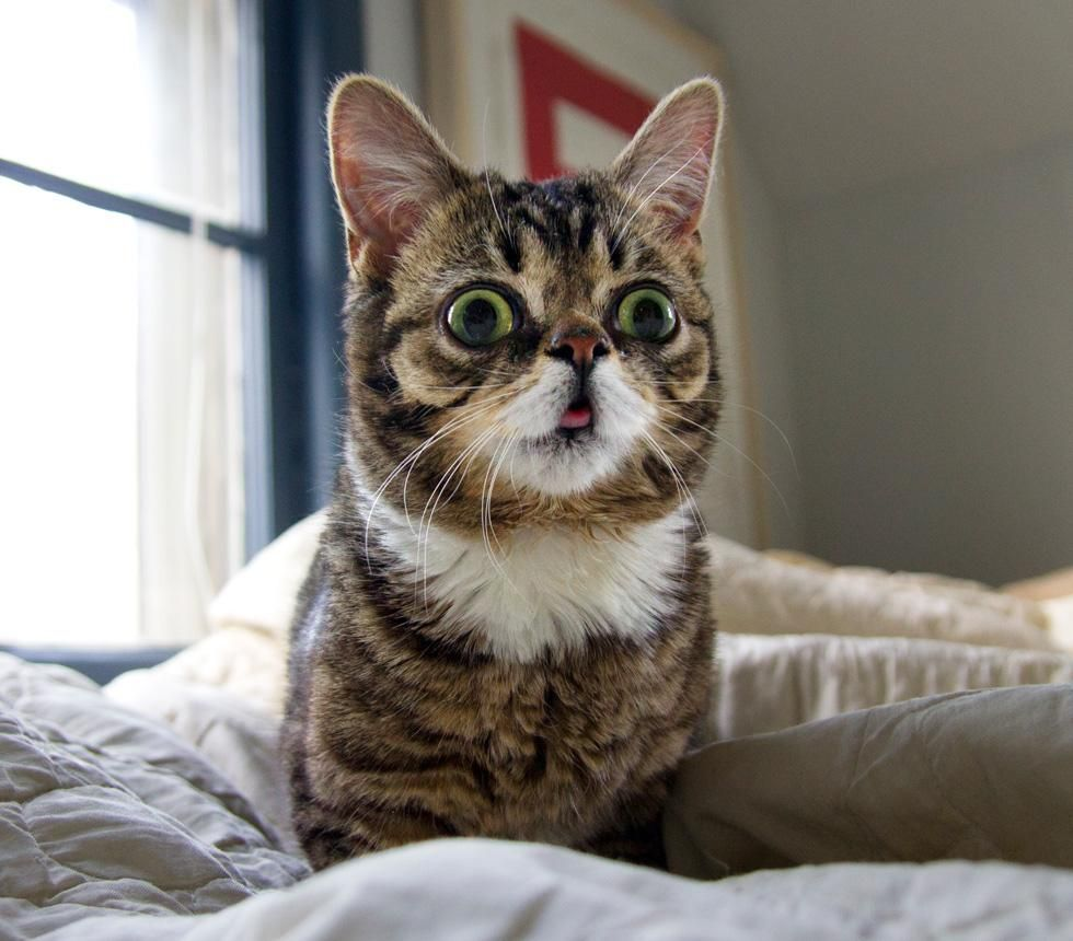 A friend recently introduced me to Lil Bub