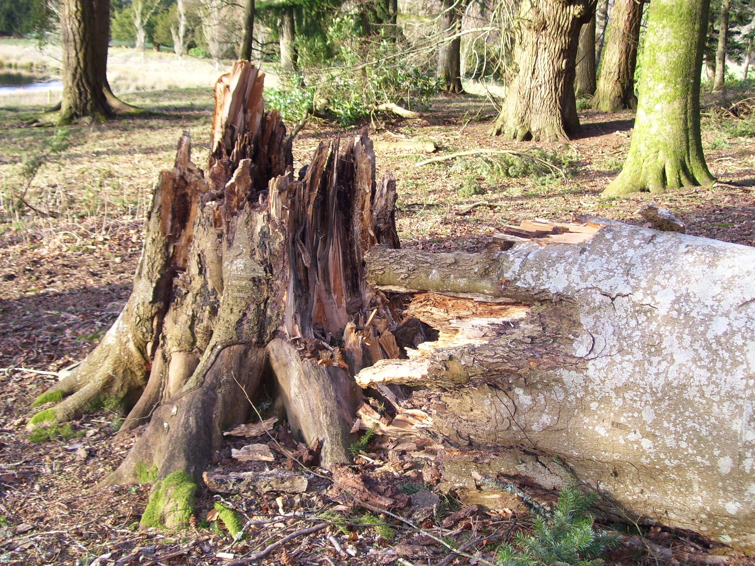Best stump removal in lithonia ga stump removal tree