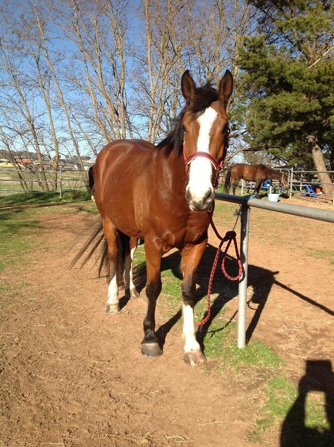 Pin On Horses 3