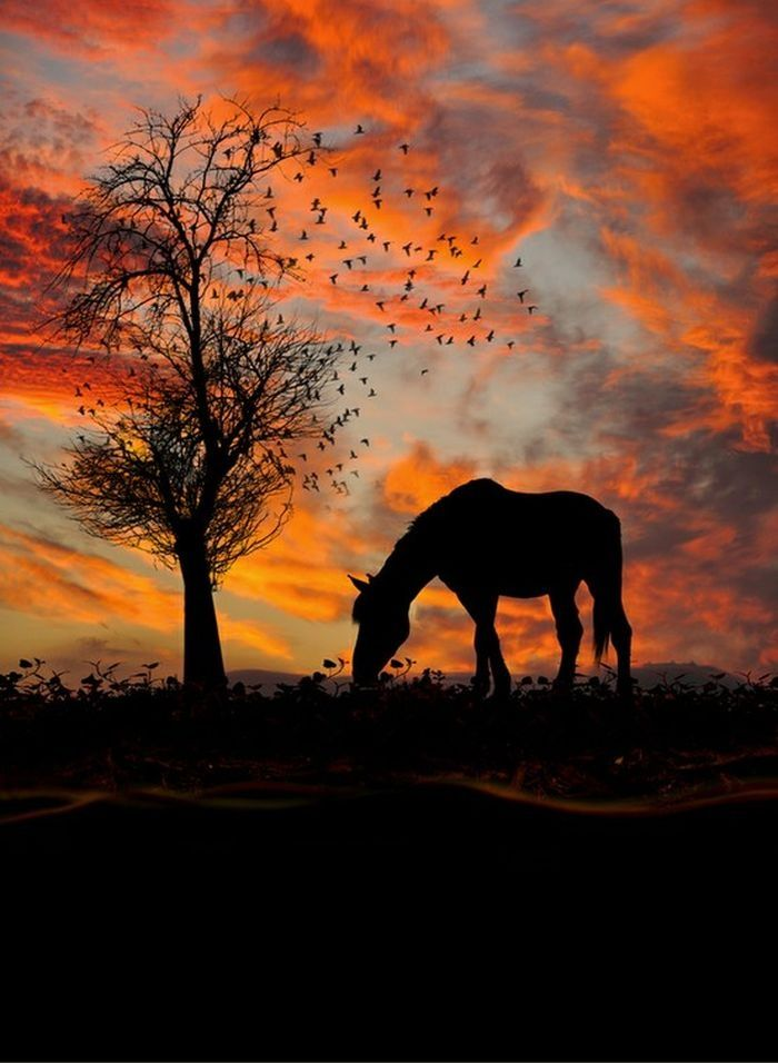 a horse in sunset
