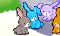 Squirrel Virtual Pet Virtual Pet Animal Games Pets