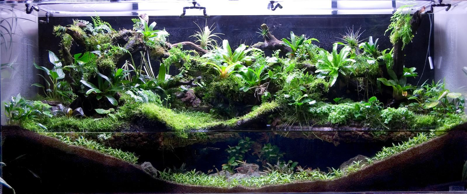 how to build a paludarium tank